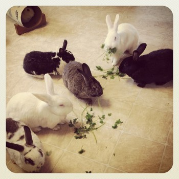 rabbitroom3