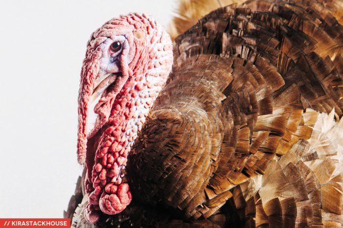 kona-turkey-harvest-home-sanctuary-04