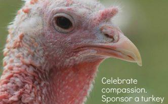 sponsor-a-turkey-2016