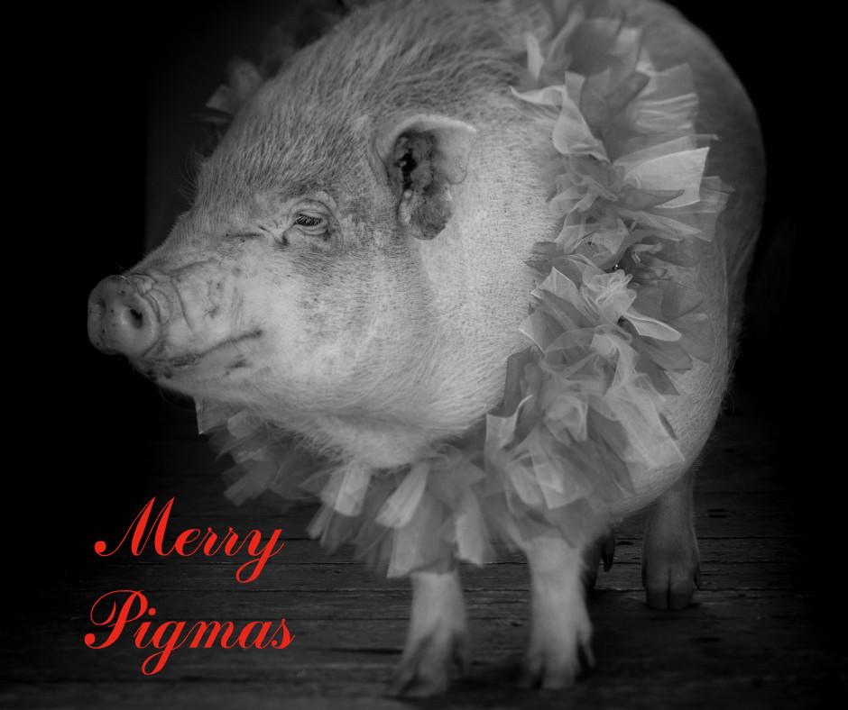merry-pigmas