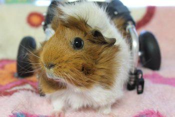 Estella Piggie
